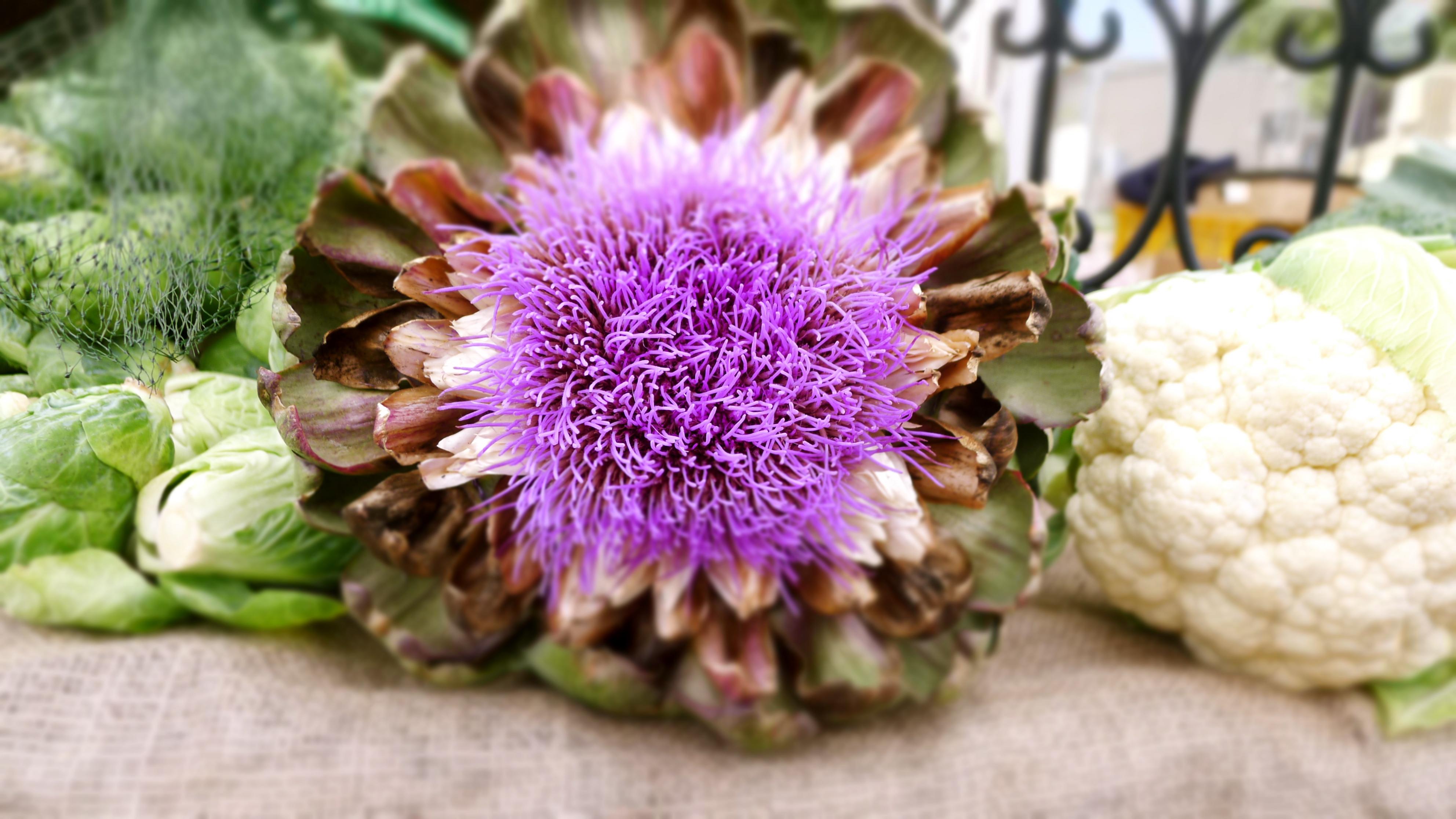 Flowered artichoke